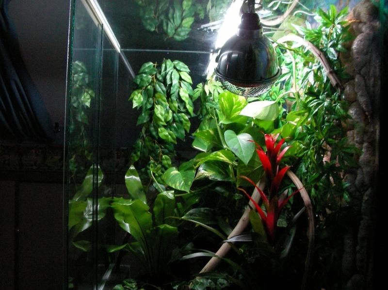 plante terrarium rhacodactylus