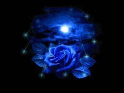 belle image d'une rose bleu