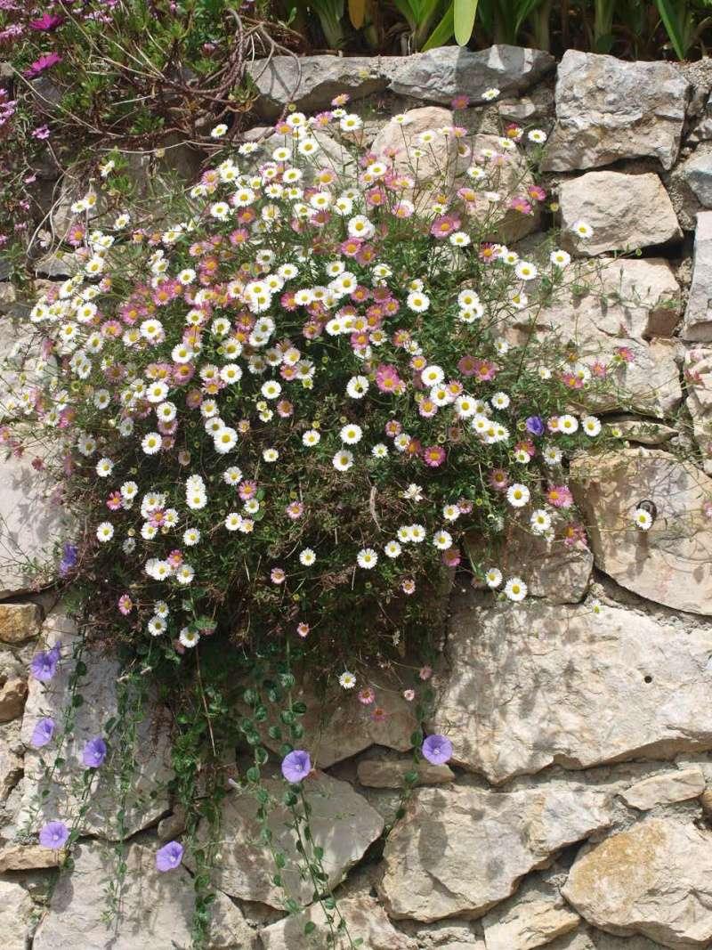 Fleurs sauvages au jardin for Au jardin des amis