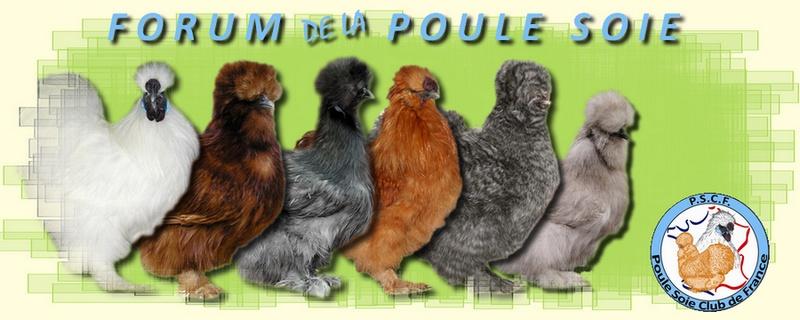 Forum de la Poule Soie
