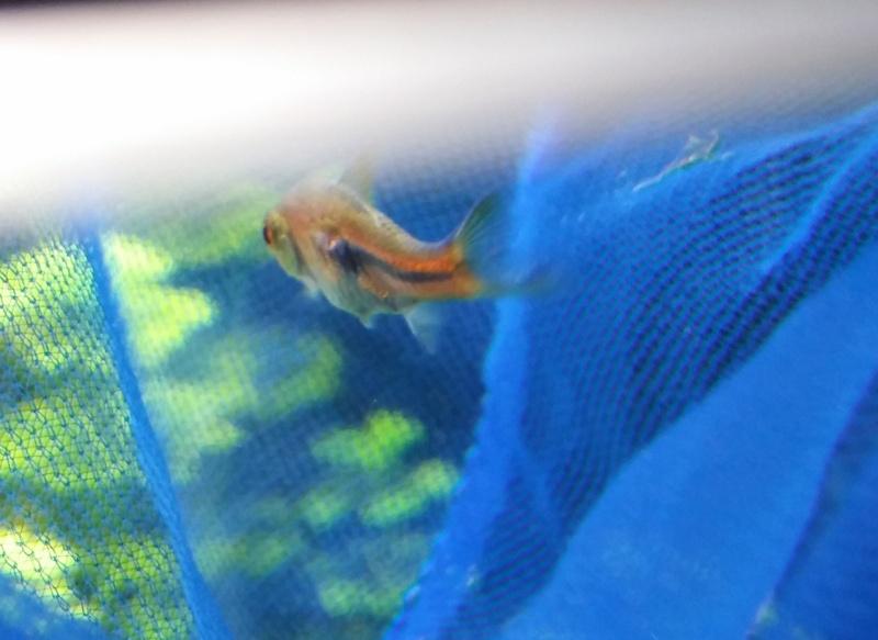poisson tordu avec un trou sur le côté