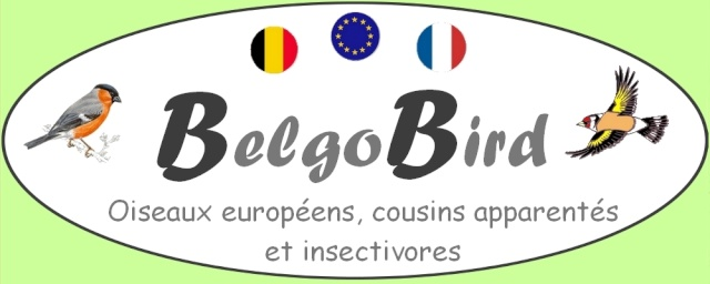 BelgoBird