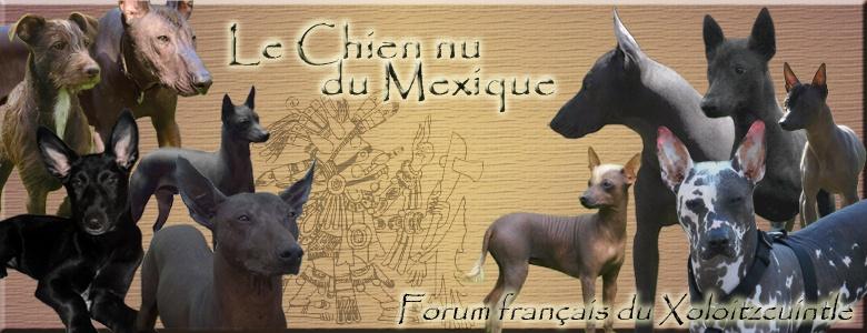 Forum français du Xoloïtzcuintle