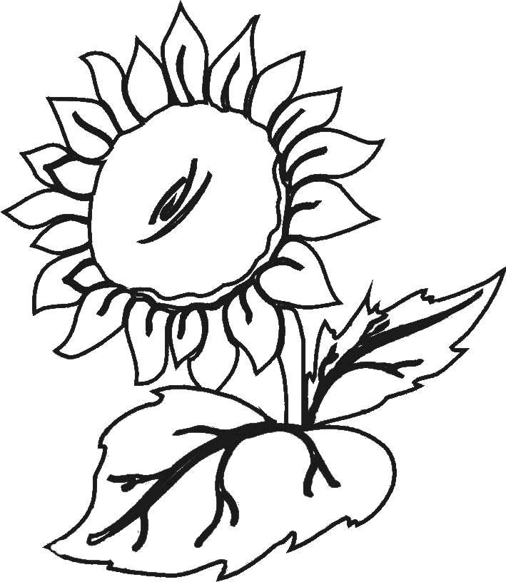 Ayuda, necesit esquemas de flores...
