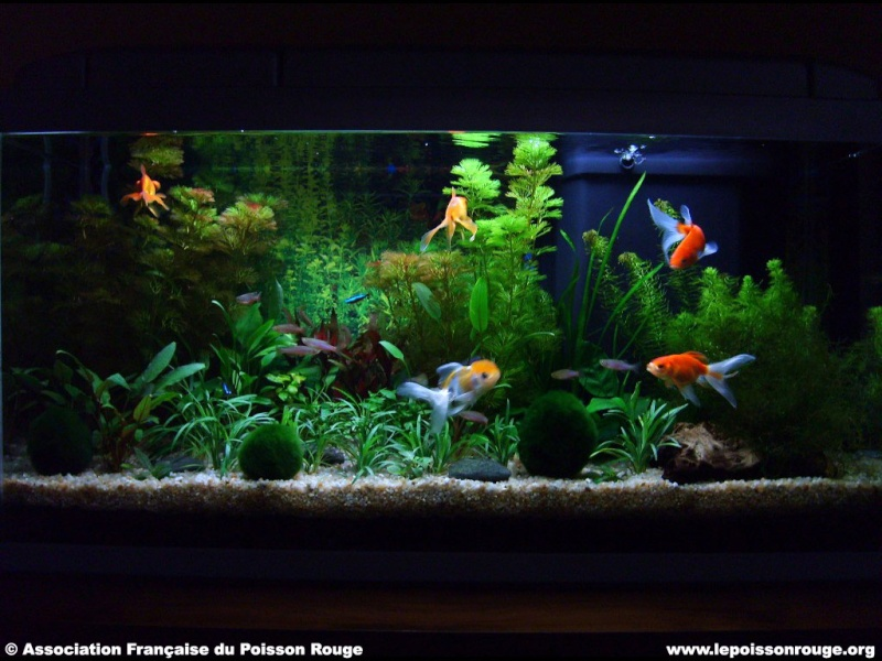 Aqua 54l n 39 volue pas for Aquarium poisson rouge taille