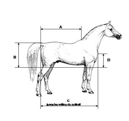 patron couture couverture cheval