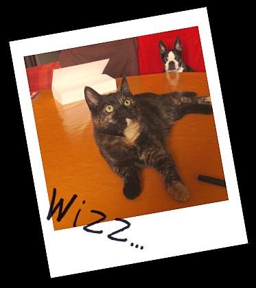 Wizz...  dans Le Miroir des Chats 02110