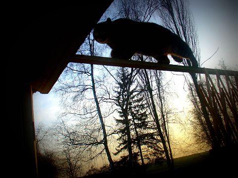 Une chatte sur un toit...  dans Le Miroir des Chats 64516110