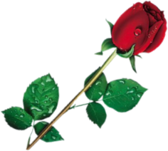 rose-f10.png