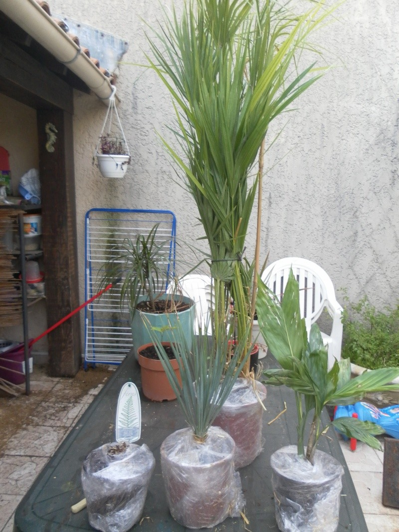 Le jardin de syljou for Le jardin 19