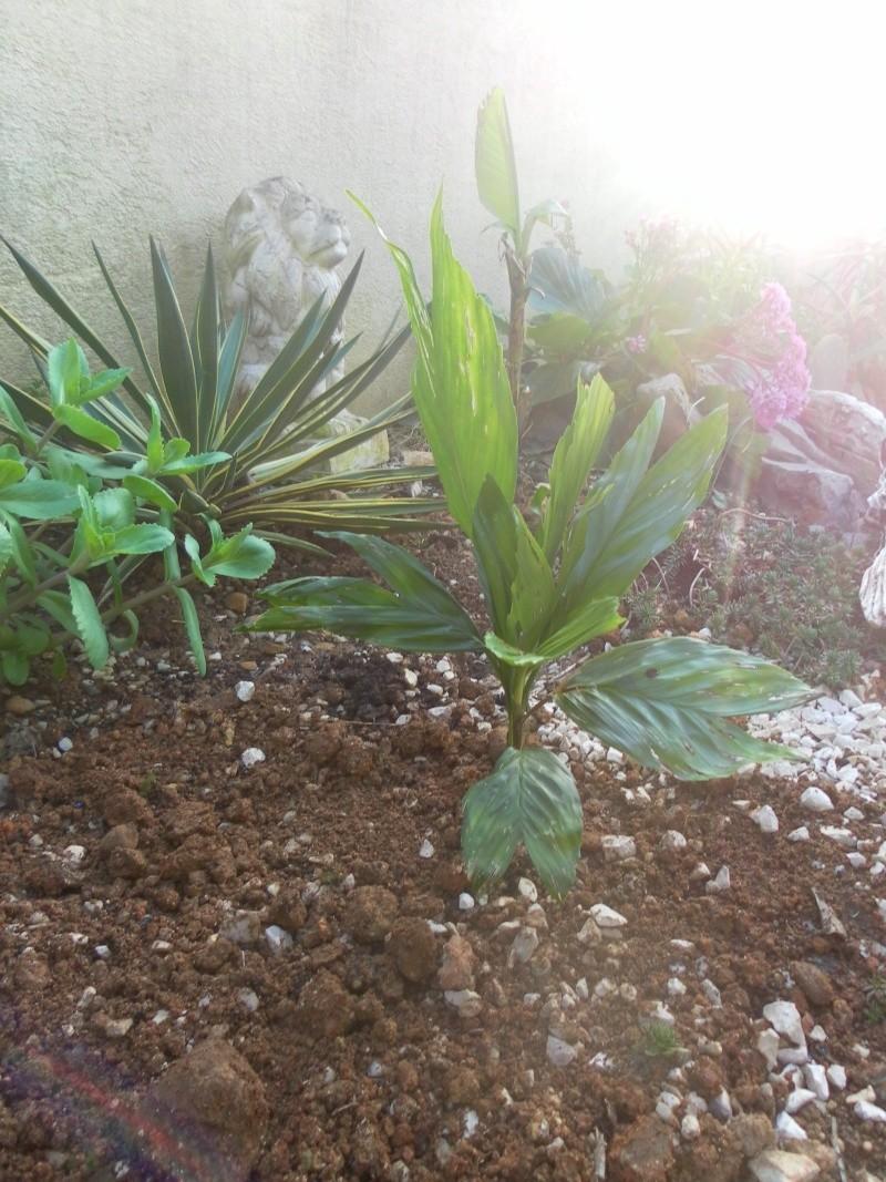 Le jardin de syljou for Le jardin d agathe 19