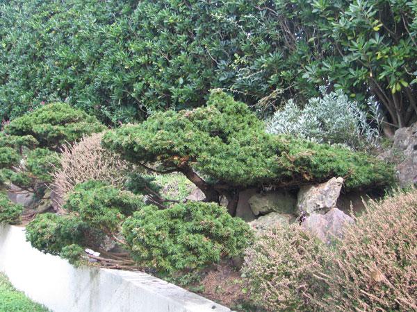 Plantes interieur et jardin page 2 - Plantes jardin japonais ...