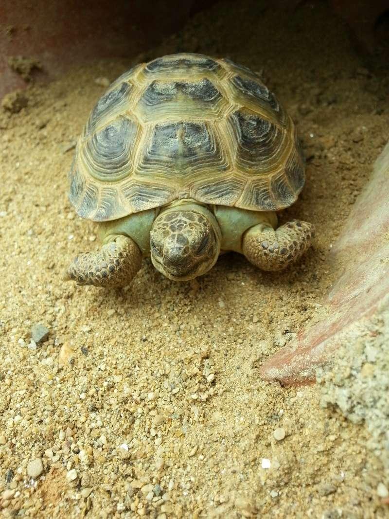 naissance tortues terrestres