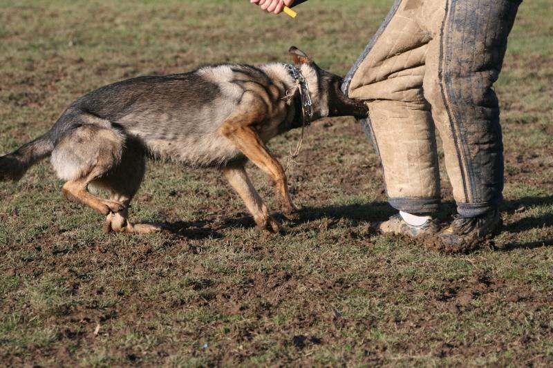 http://i19.servimg.com/u/f19/14/09/51/70/entrai11.jpg