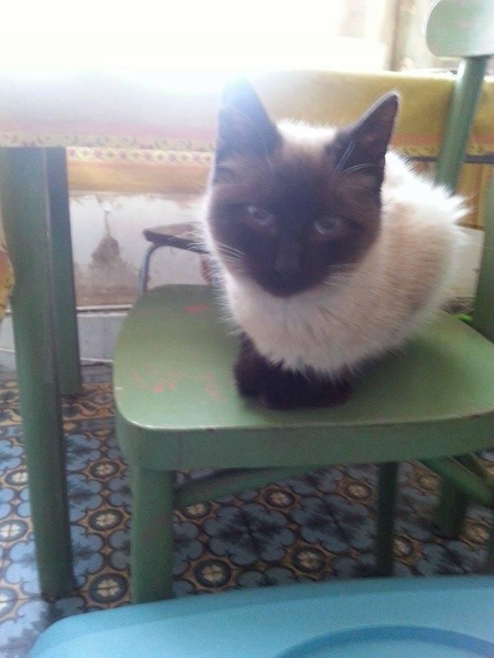 Un chat de plus la maison for Adaptation chat nouvelle maison