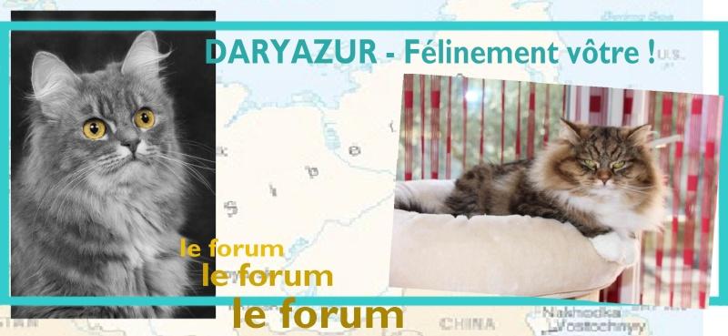 Daryazur - chats sibériens