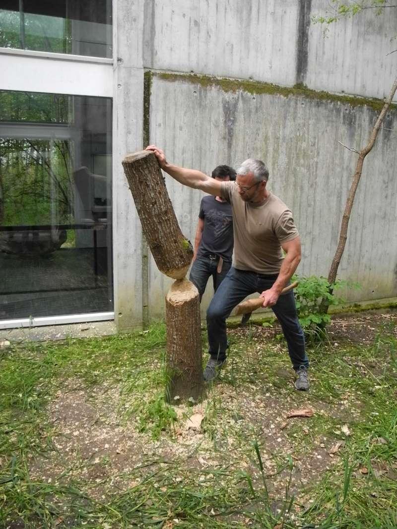 abattage d 39 un arbre la hache polie. Black Bedroom Furniture Sets. Home Design Ideas