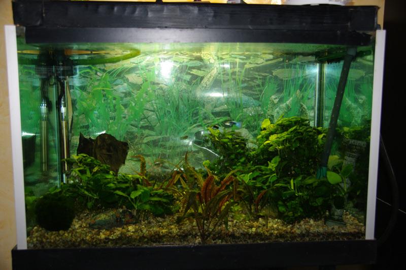 Pompe air et aspiration poisson for Pompe bac a poisson