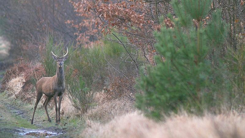 Fin d'hiver en foret de Fontainebleau