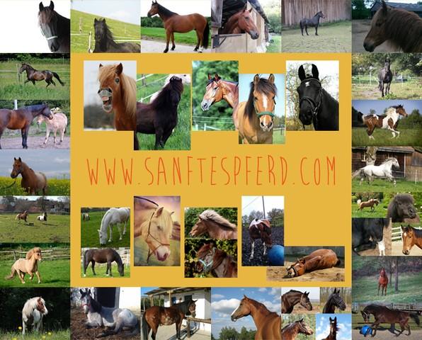 SANFTESPFERD