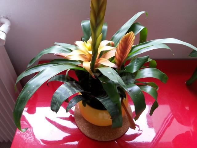 Plantes d 39 aqua terrarium for Nettoyer feuilles plantes
