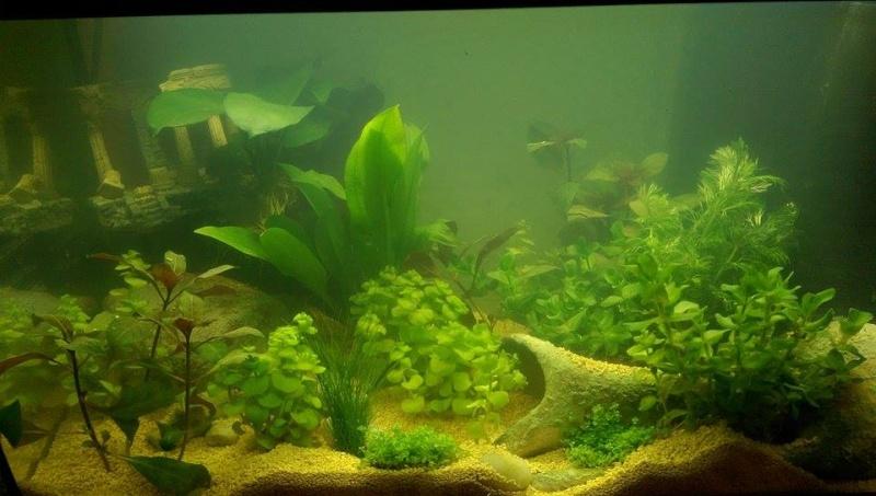 plantes qui grandit trop vite. Black Bedroom Furniture Sets. Home Design Ideas