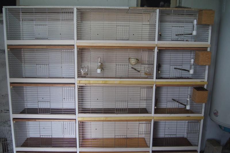 Ma batterie d 39 levage for Fabrication cage oiseaux exterieur