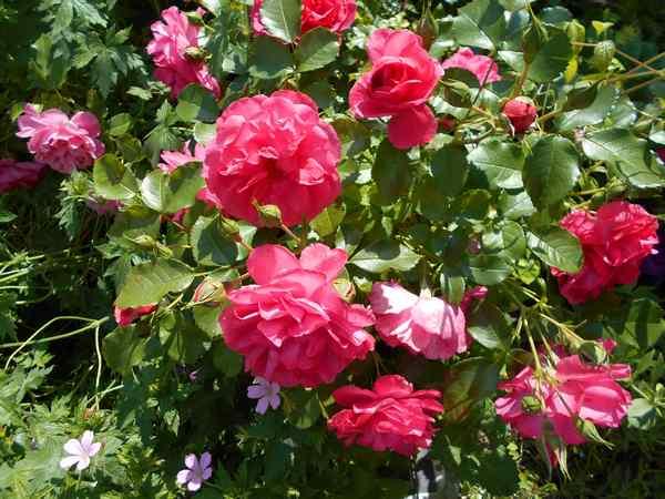 rosari10.jpg