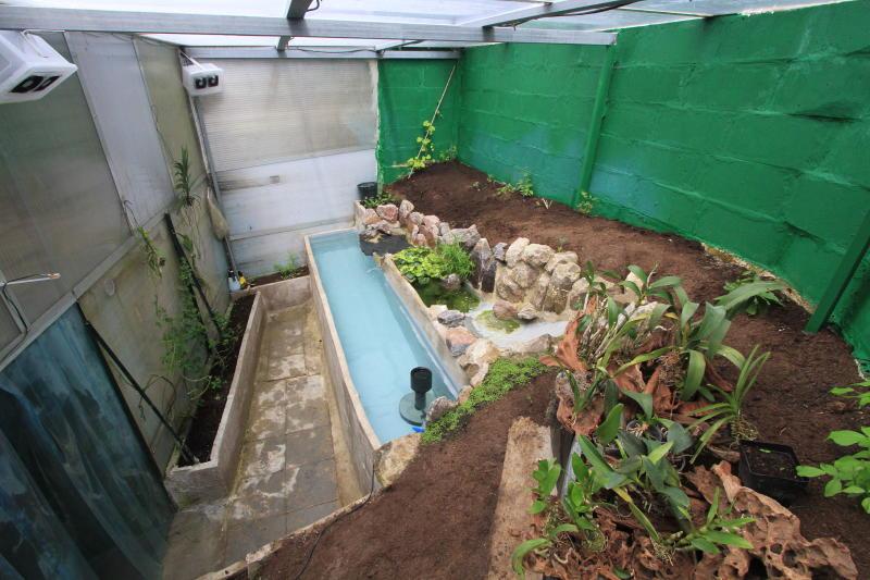 Ma serre tropicale version 2 for Brumisateur bassin exterieur