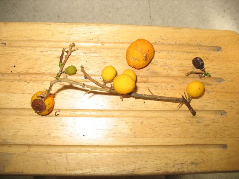 fruits10.jpg