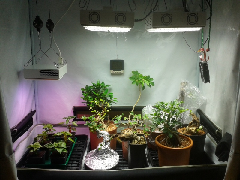 I have moved some stuff around like i always tend to do the GrowNorthern has joined the Apache lights it is a nice little light and everything i put under ... & Indoor Bonsai under LED lights. - Page 7