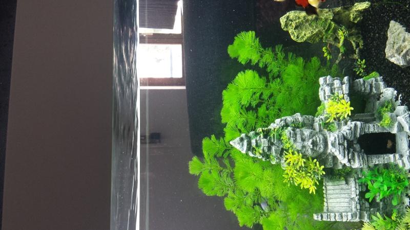 eau de l'aquarium pleine de poussière