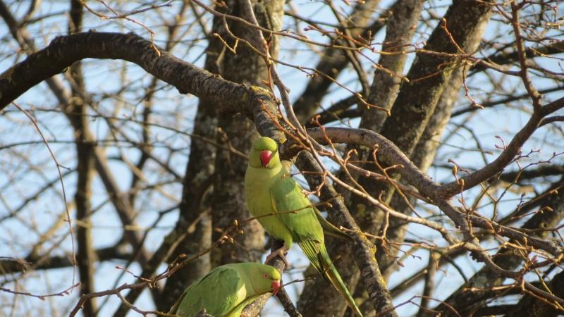 Les oiseaux vu de ma fen tre for Vu de ma fenetre