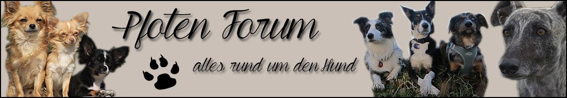 Pfoten-Forum