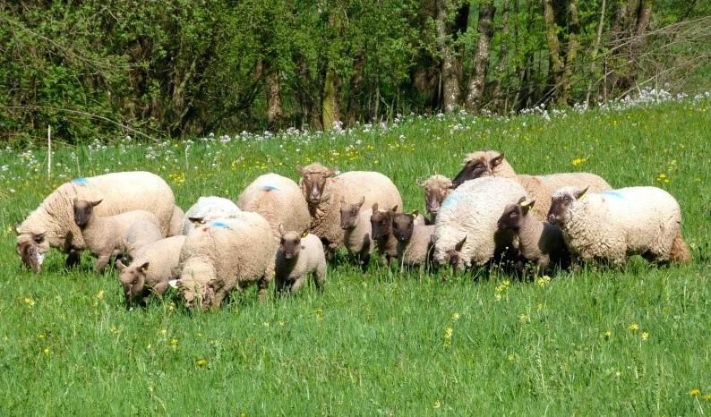 SHEEPPLANETE...100% SHEEPDOGS!!!