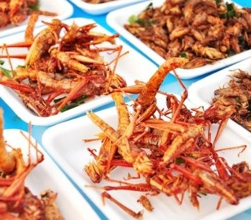 insetti da mangiare