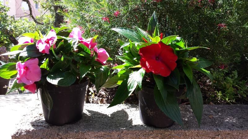 Vos plantes, fleurs, jardin ! - Page 15