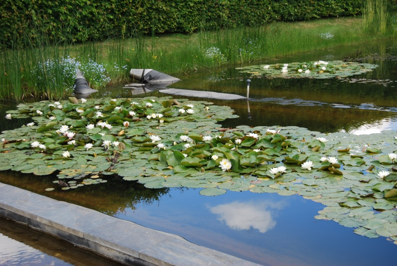 Visites de parcs jardins aquatiques et professionnels du bassin - Bassin sur balcon angers ...