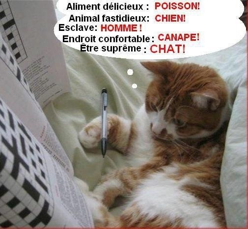 Chat humour image zd38 jornalagora - Photo chat marrant ...