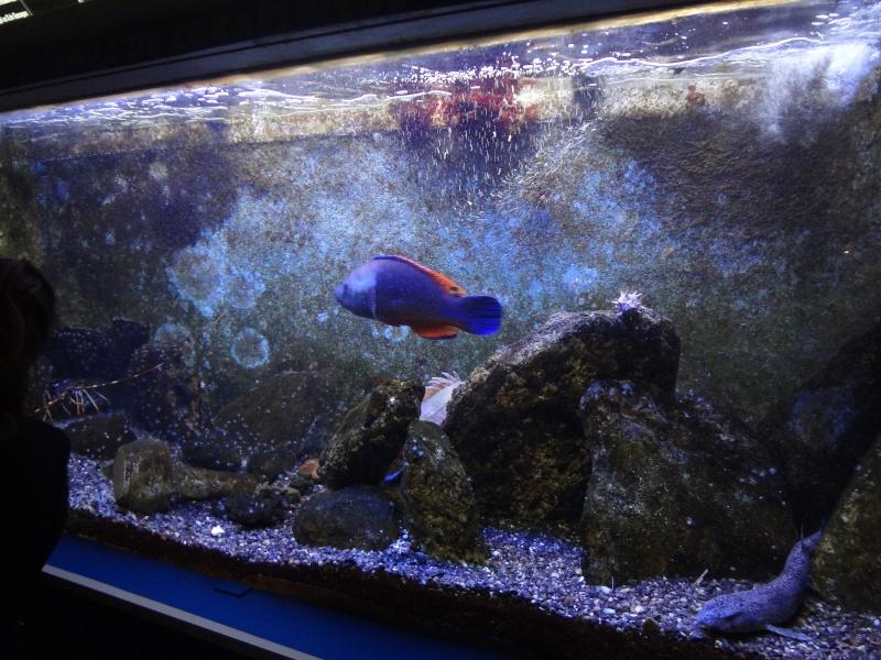 aquarium canet en roussillon