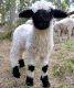Карликові і декоративні породи овець