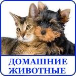 Haifa-city. Израильский форум на русском языке. Раздел 'Домашние животные', посвящённый нашим любимым питомцам.