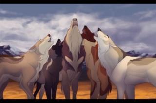 RP Loups