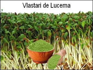 http://i19.servimg.com/u/f19/19/17/38/41/lucern13.jpg