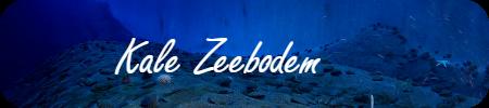 Kale Zeebodem