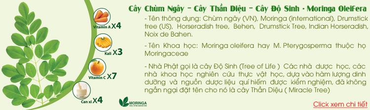 Diễn Đàn Moringa_Việt Nam