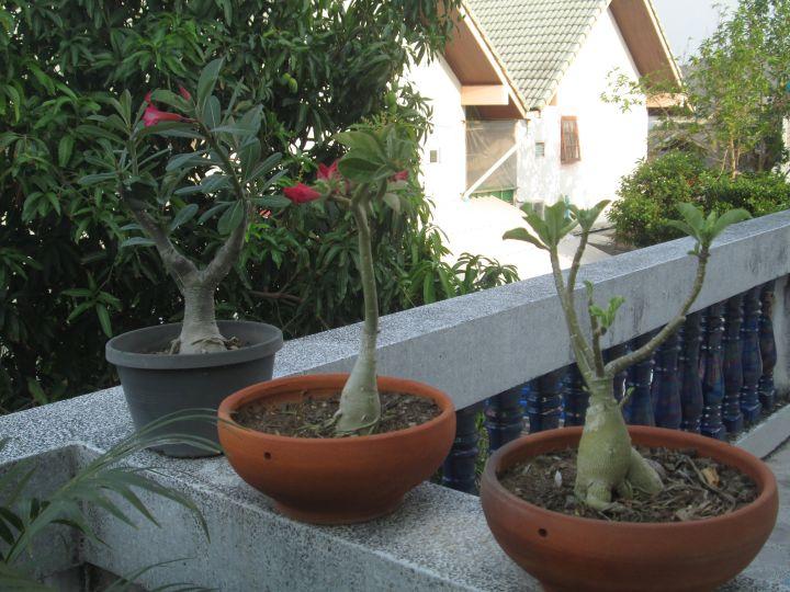 Bonjour tout le monde - Planter un eucalyptus dans son jardin ...