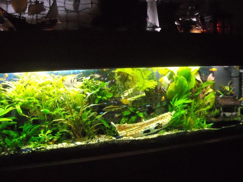 aquariums deco communautaires