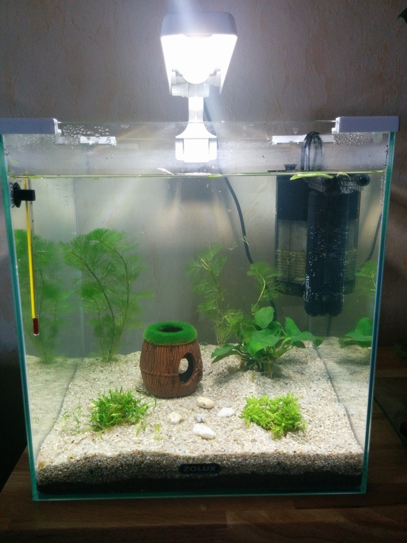 nano 30l pour mon futur betta forum aquarium. Black Bedroom Furniture Sets. Home Design Ideas