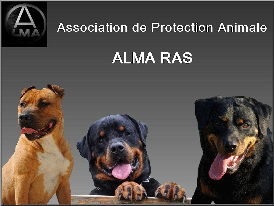 ASSOCIATION ALMA RAS